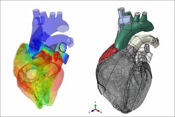 ČVUT se podílí na unikátním medicínském projektu Living Heart