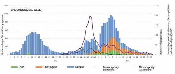 Počet případů ziky (zeleně), horeček chikunguya (oranžově) a dengue v Brazílii během epidemie v letech 2015 a 2016. Plnou fialovou linkou jsou pak vyznačeny neověřené a nahlášené případy mikrocefalie, šrafovanou ověřené případy. Jak je vidno, mikrocefalie se na vrcholu epidemie diagnostikovala velmi často mylně, na druhou stranu je patrný reálný nárůst případů. A to především u žen, které otěhotněly předtím, než se o zice začalo skutečně mluvit. Nasvědčuje to i tomu, že se lékaři i samotné matky situaci dokázali přizpůsobit a reagovat na ni.