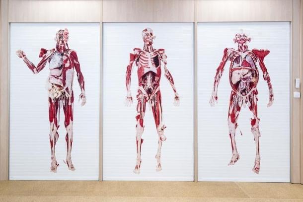 Studenti Fakulty biomedicínského inženýrství mají k dispozici novou laboratoř anatomických modelů