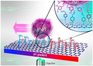 Schematické znázornění experimentu pohybu nanočástice po povrchu grafenu, FND je zkratka pro fluorescenční diamant