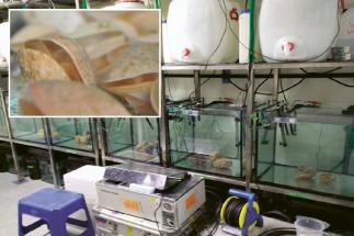 Příčiny výkyvů teploty i pH vody v oceánech studují vědci zapojení do projektu BASE-LiNE Earth za pomoci mořských bezobratlých živočichů kmene ramenonožců