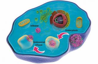 Nanokvěty naložené terapeutickými geny poté obstály v experimentech na výbornou