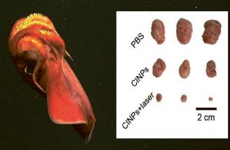 Nanočástice sépií jsou zaručeně přírodní a podle všeho se dobře snášejí s jinými organismy
