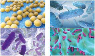 Z výsledků laboratorních zkoušek vyplývá, že v průběhu 24 hodin je zlikvidováno 98,9 % bakterií