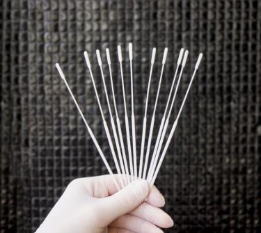 Výtěrové tyčinky z Česka, které se používají při odběru vzorků pro testování na koronavirovou nákazu /Zdroj fotografie: ELLA-CS/