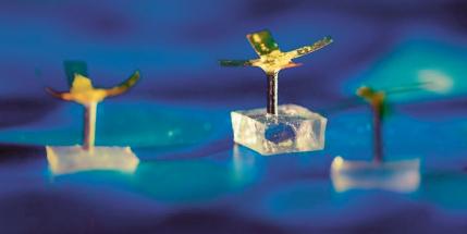 Roboty inspirované polypy korálů čistí vodu