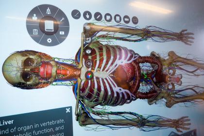 V simulátoru se dají přidávat nebo naopak odnímat jednotlivé orgány