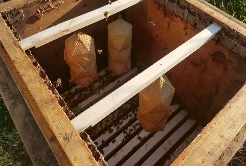 Stavění stínítek včelám neublíží, ale šetrným přístupem může naopak včelám a jejich chovatelům pomoci. Včely jsou velmi produktivní a byly by schopné za sezónu vytvořit hodně stínítek. Eduard se svými spřátelenými včelaři jim však dává do úlu jen tři matrice.