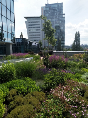 Zelená střecha administrativní budova