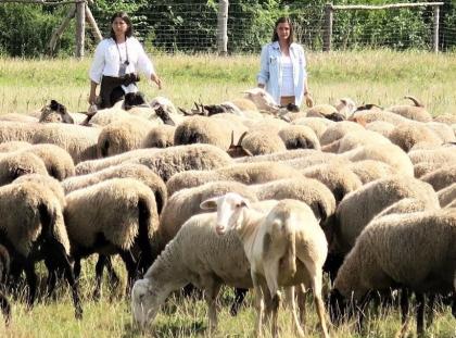 Pastevkyně Andrea Hamáková (vlevo) a Marie Hamáková v akci